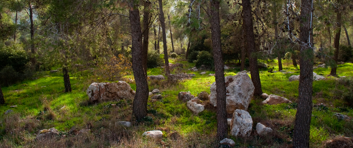 Winter Afternoon in the forest. Neighborhood of Jerusalem. Israel.